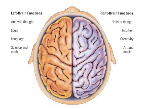 a study on the right and left brain of the human body